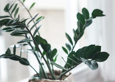 Rosanna-Latiano-Fiori e piante